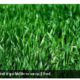 scientists-finding-way-to-replace-plastic-from-food-pakaging-by-grass